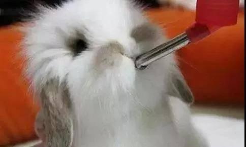 兔兔每天应该喝多少水呢