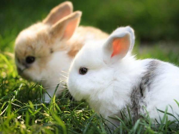 兔子睡觉的姿势