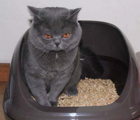 怎么训练猫咪大小便