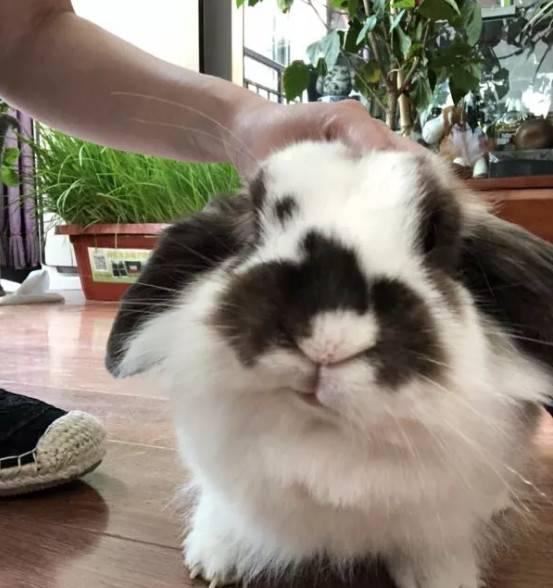 兔子嘴歪了是怎么回事?