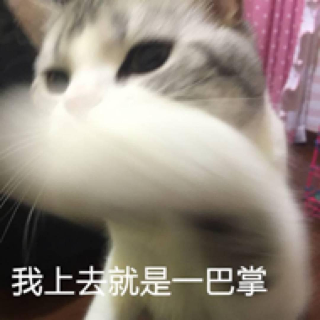猫猫表情包