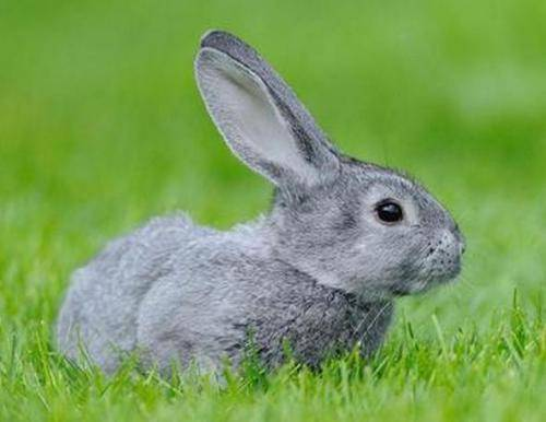 养兔子的好处?为什么说你需要一只宠物兔