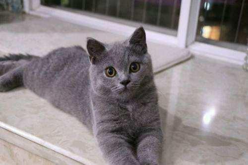 蓝猫怎么看品相?仔细观察这几个特征
