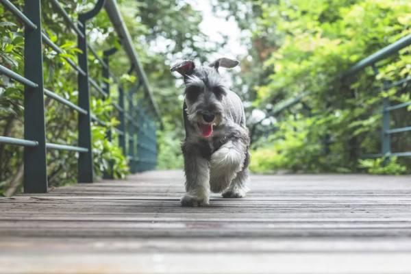 狗狗最常见的五种行为问题——攻击行为