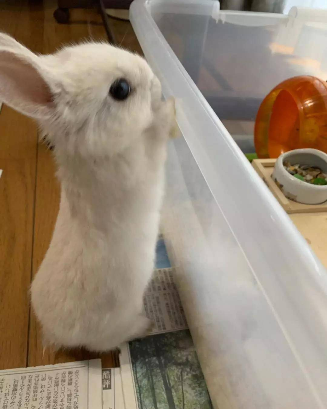 原来兔兔小的时候就像一个小毛球,真的好萌啊