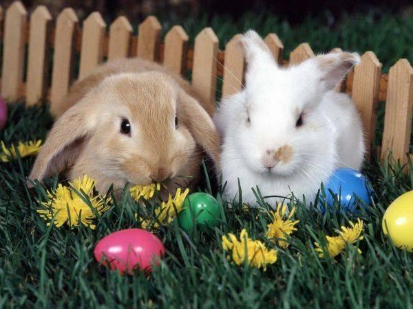 养宠物兔子要注意什么