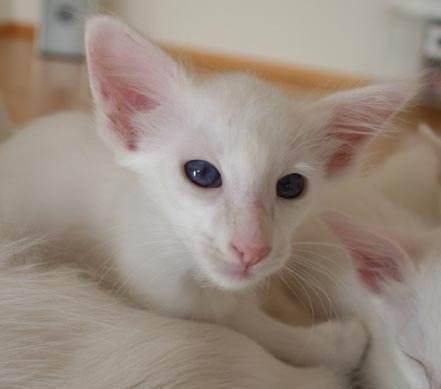 猫咪知识 | 怎样科学喂养猫咪
