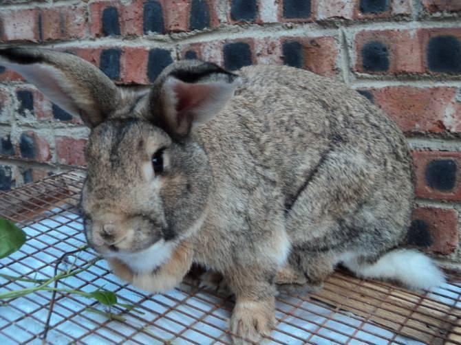 可以往兔子的饮水中加入冰块吗?