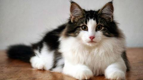 猫咪靠什么分辨主人