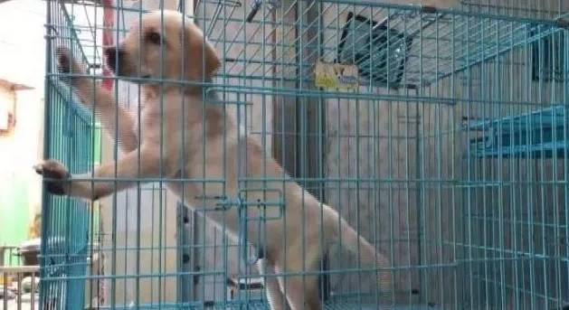 """狗狗买回来一周必死?""""星期狗""""背后的黑幕令人震惊!"""
