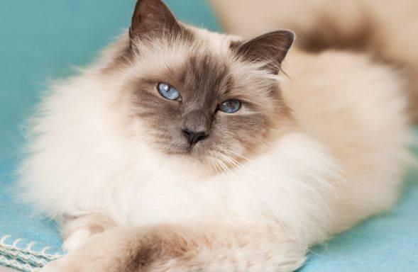 如何分析猫咪的呼噜