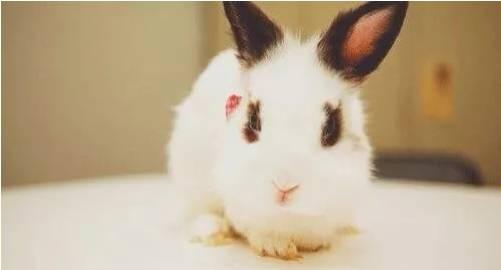 兔子被,螨虫、真菌、蚊虫叮咬怎么办?