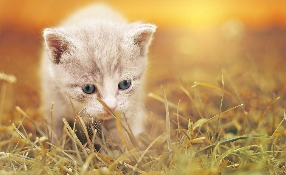 猫宝贝 小猫