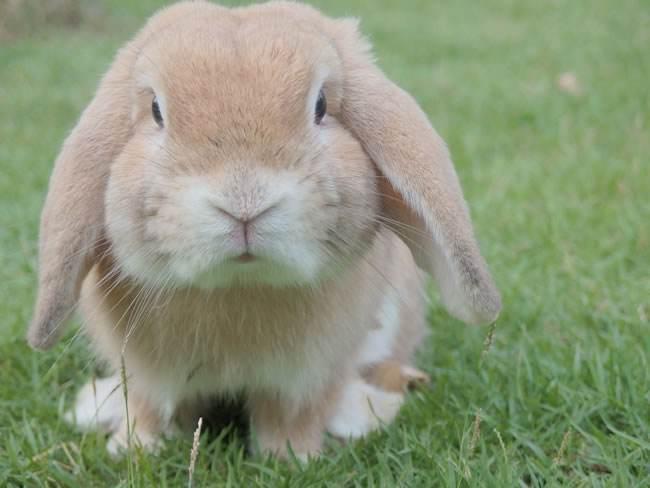 兔子可以不剪指甲吗?