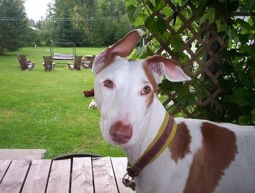 宠知识 | 狗狗的换牙期重点