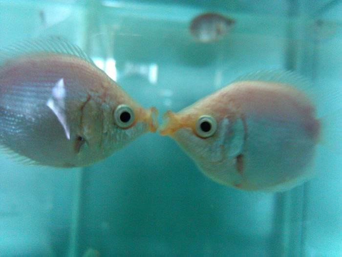 养鱼用什么水,养鱼的水有什么要求,纯净水可以养鱼吗?