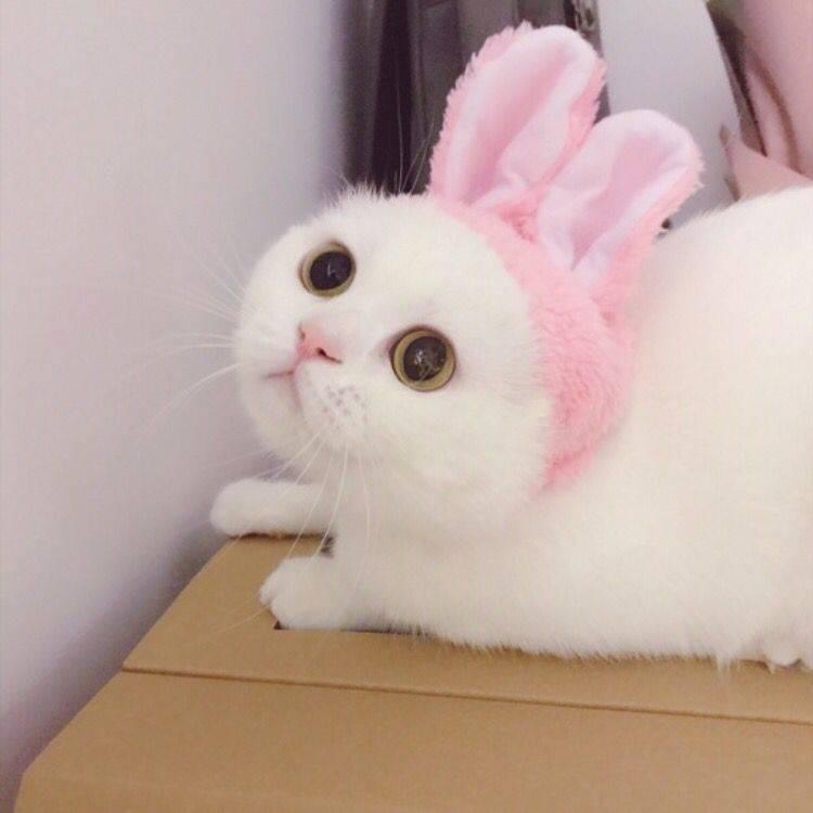 小奶猫 可爱 猫星人