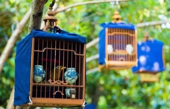 画眉鸟叼食的原因和纠正方法