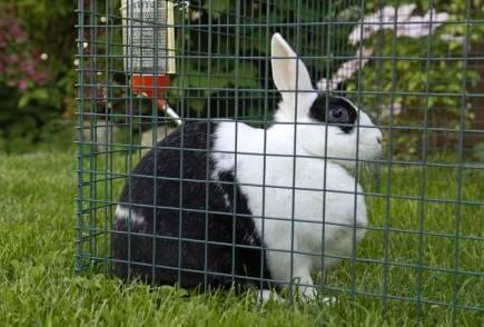 兔子笼子怎么做