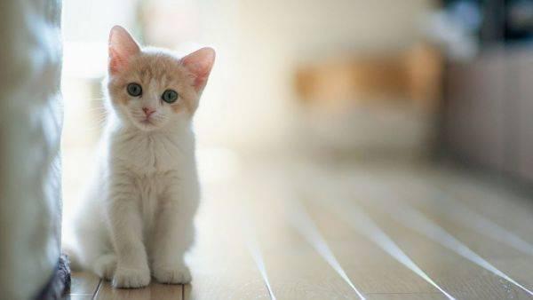 怎么判断猫咪体内有虫