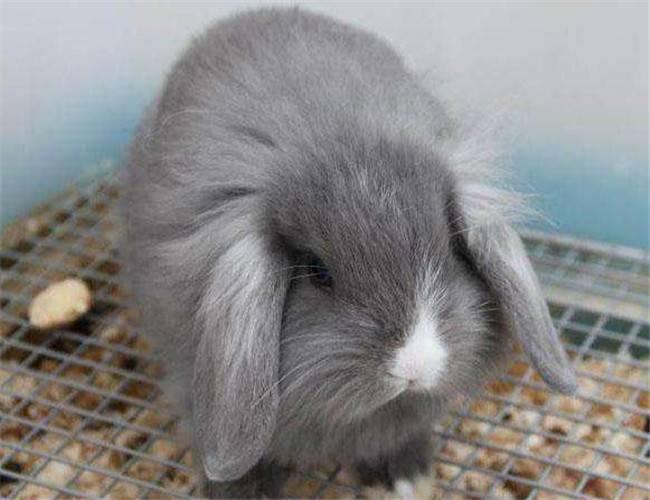 兔子减肥可以只吃草不吃兔粮吗?