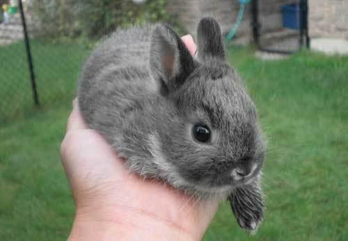 怎样预防兔子的脚底皮肤病