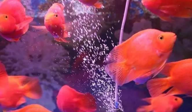 """拒食?趴缸?……教你一招防治观赏鱼""""苦夏""""!~"""