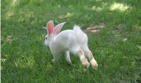 如何避免兔子在运动时受伤