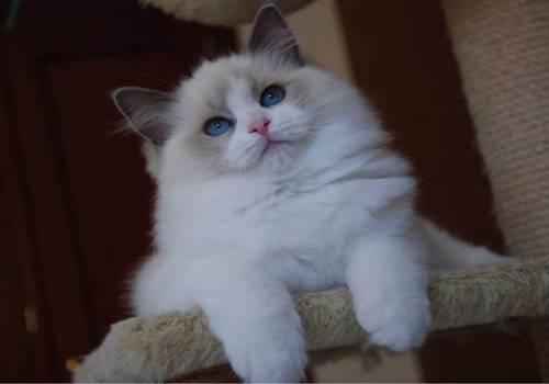 猫咪的尾巴会说话!