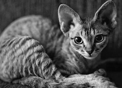 养猫之前需要做好的五个准备