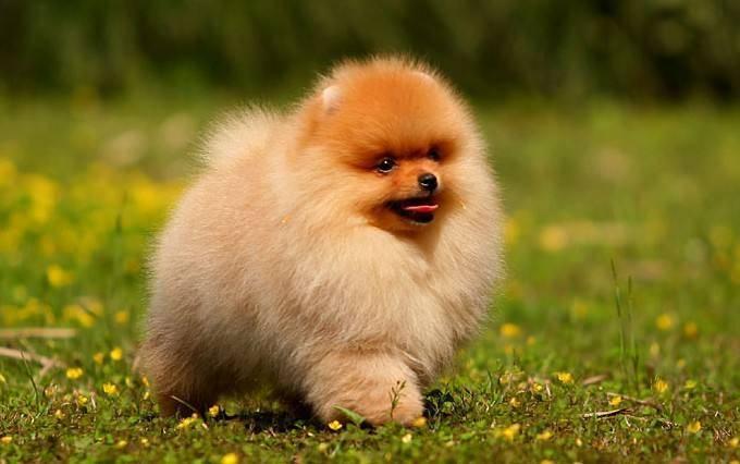 狗狗生病有哪些症状,以及狗狗的一些常见疾病。
