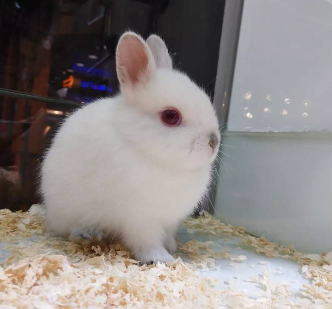 人感冒会传染给兔子吗