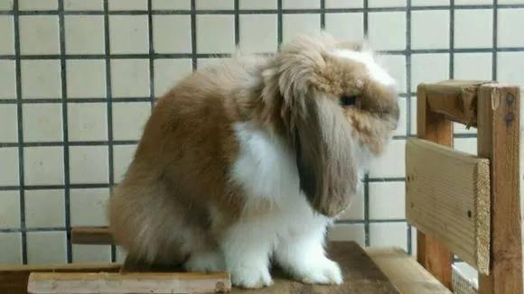兔子跺脚表示什么意思