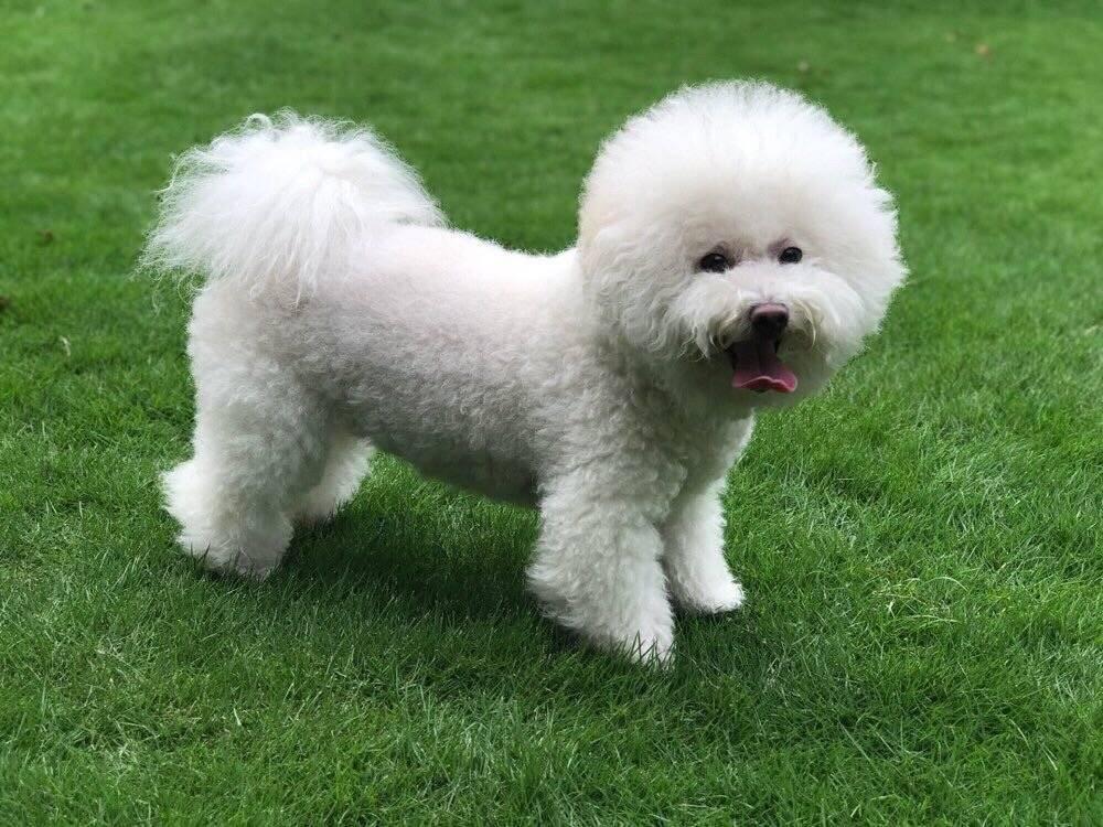 希望多一些大草坪和公园可以让狗子进去的,大家说是不是呀!