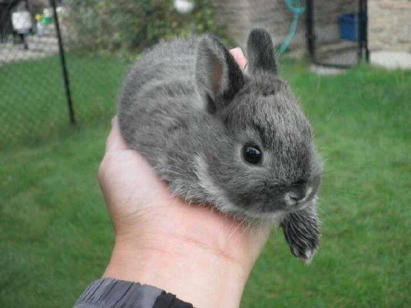 新手养兔子有哪些需要注意的事项?以及需要准备哪些常用药?