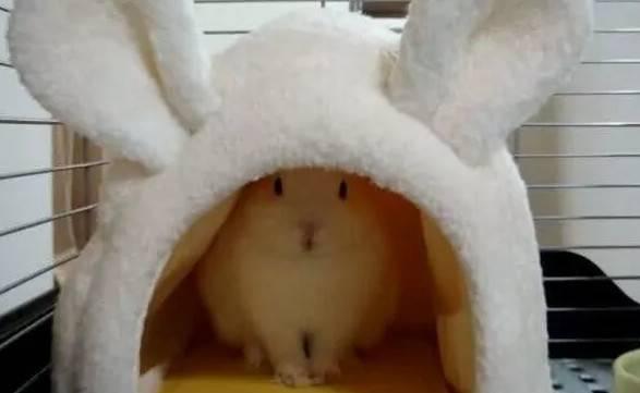兔子不睡兔窝怎么办
