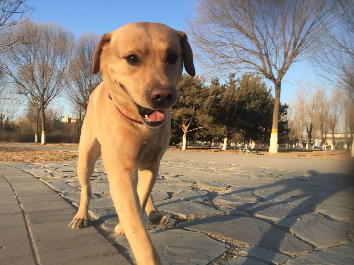 狗狗不吃东西怎么办,狗狗挑食怎么办,就在狗狗挑食的小秘方