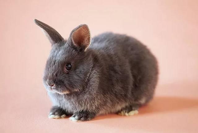 兔子会叫吗?是什么样的?
