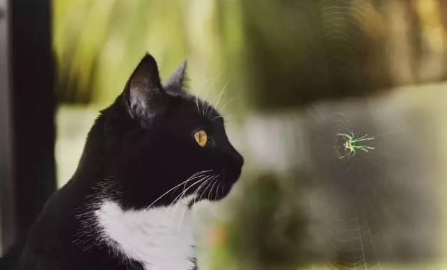 傻猫,再抓蜘蛛蜜蜂扣你小鱼干!