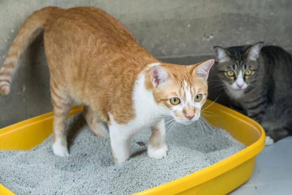 猫尿床及猫咪不在猫砂盆里拉屎的原因