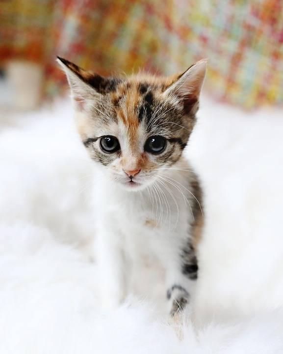 小猫, 悲伤的眼睛