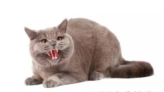 猫突然发狂攻击主人,猫咪攻击主人怎么办