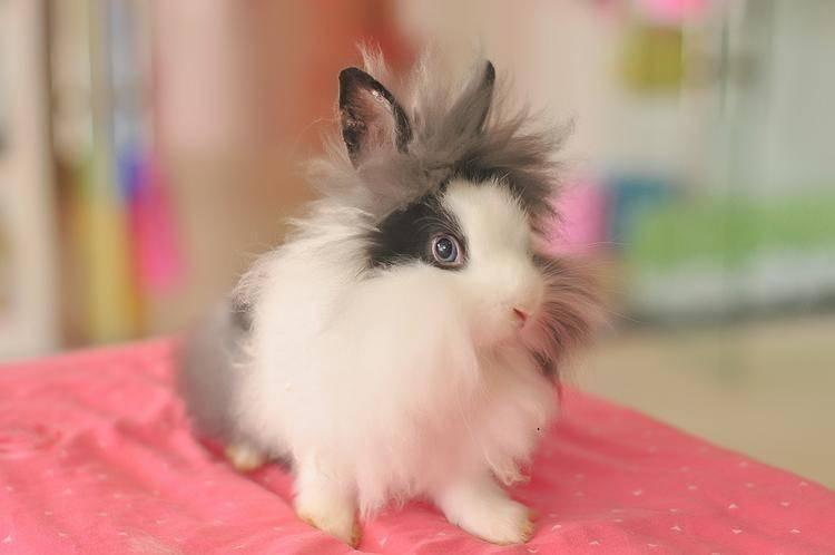 网上的养兔子指南真的ok