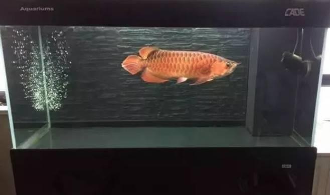 五大新手养鱼品种推荐,好看也好养