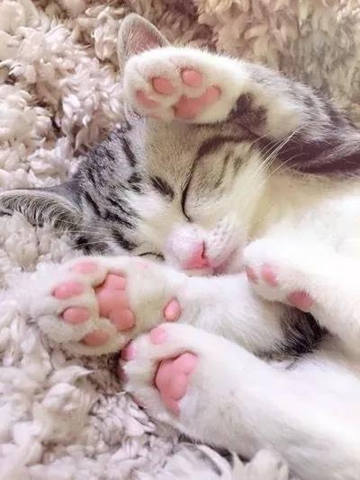 从来没有见过这么诱惑的猫脚,下一秒就想吃掉....小猫的肉垫肉肉的萌萌的,一般人都会有忍不住想摸的冲动,但是,这可不是什么人都可以摸的。
