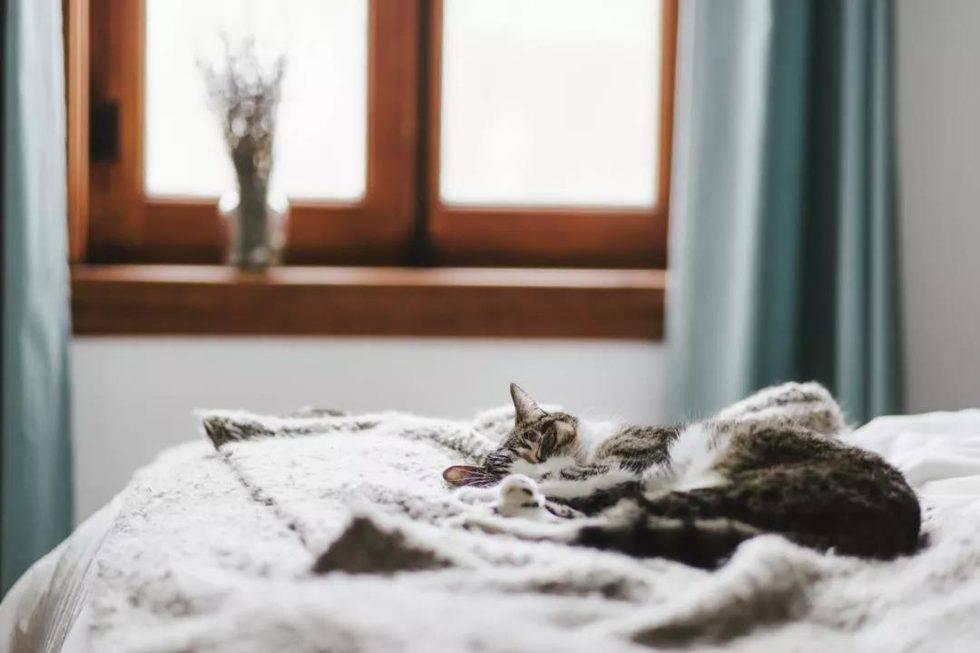 猫猫.jpg
