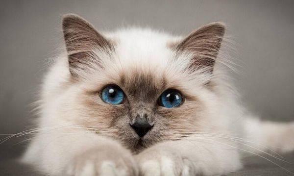 猫可以喝酸奶吗