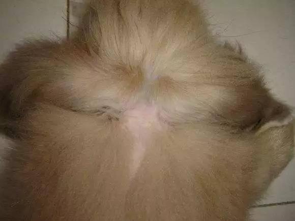 哪些原因会导致兔兔脱毛?