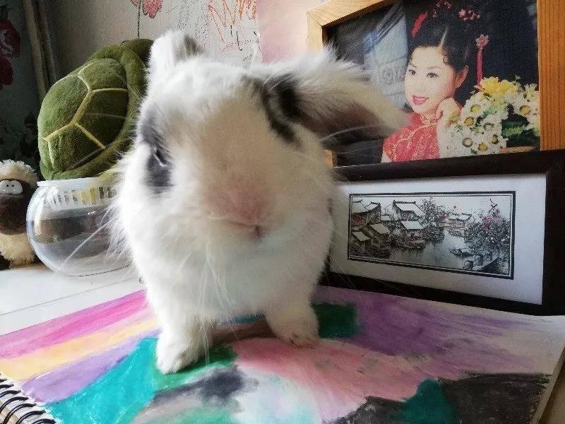 小兔子有点萌哈哈哈哈哈哈