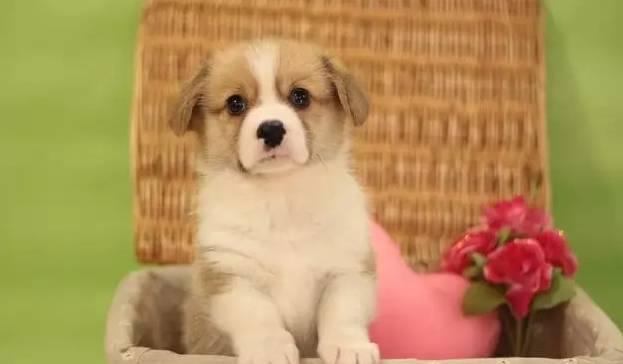 当你决定养狗狗的时候,你是否能够负责它的一生?